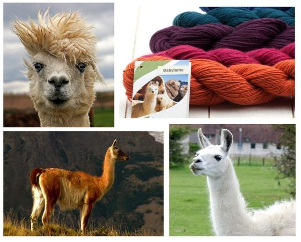 Lama_yarn.jpg