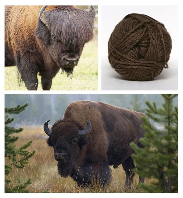 bizon-.jpg