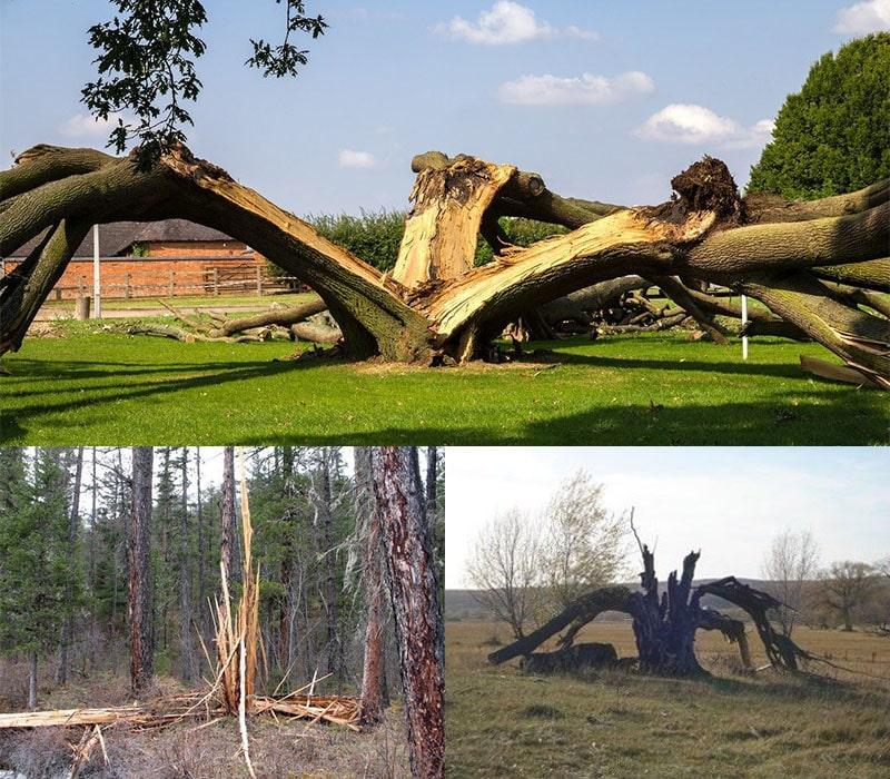 наслідки ударів блискавки в дерево