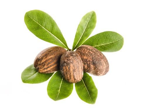 Масло ши или каритэ (Butyrospermum Parkii)