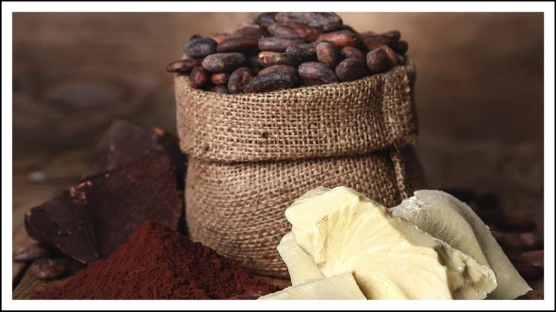 Какао-бобы_составляющие.jpg