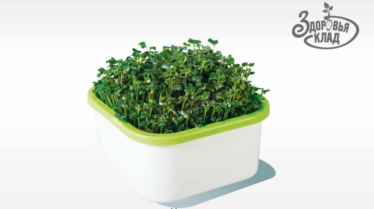 Моя микрозелень в лотке