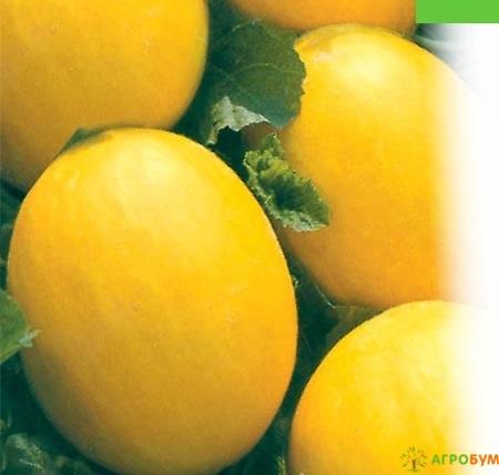 Купить семена Дыня Золотистая 1 г по низкой цене, доставка почтой наложенным платежом по России, курьером по Москве - интернет-магазин АгроБум