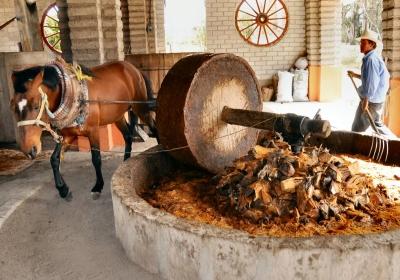 метод производства пинья
