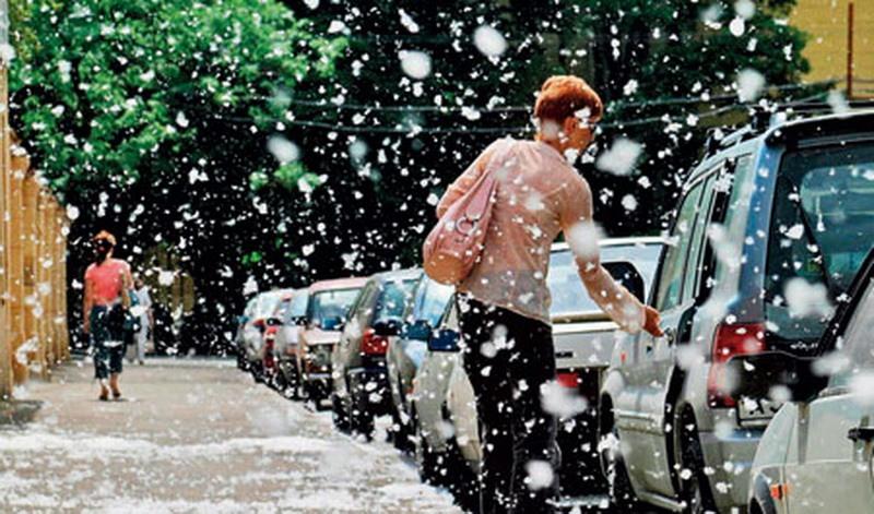 Какие проблемы могут возникнуть с авто, при цветении тополя