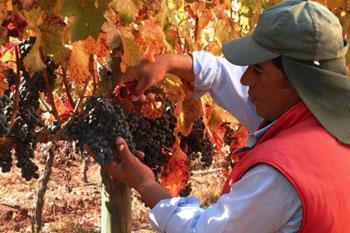 Винодельческий регион Чили
