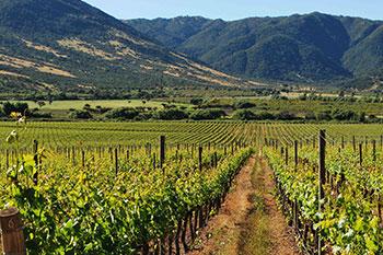 Виноградники в Чили
