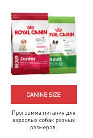 rc_brand_zone_dogs_09.jpg