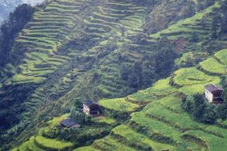Primavera Непал
