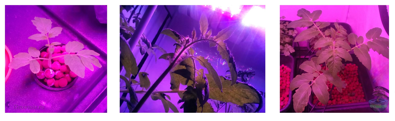 Растения_2017_growmir.ru_гроумир.jpg
