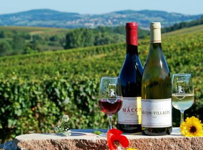 Органическое вино