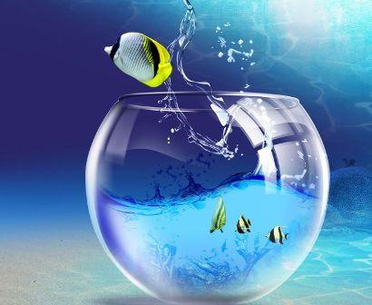 Рыбка выпрыгнула из аквариума