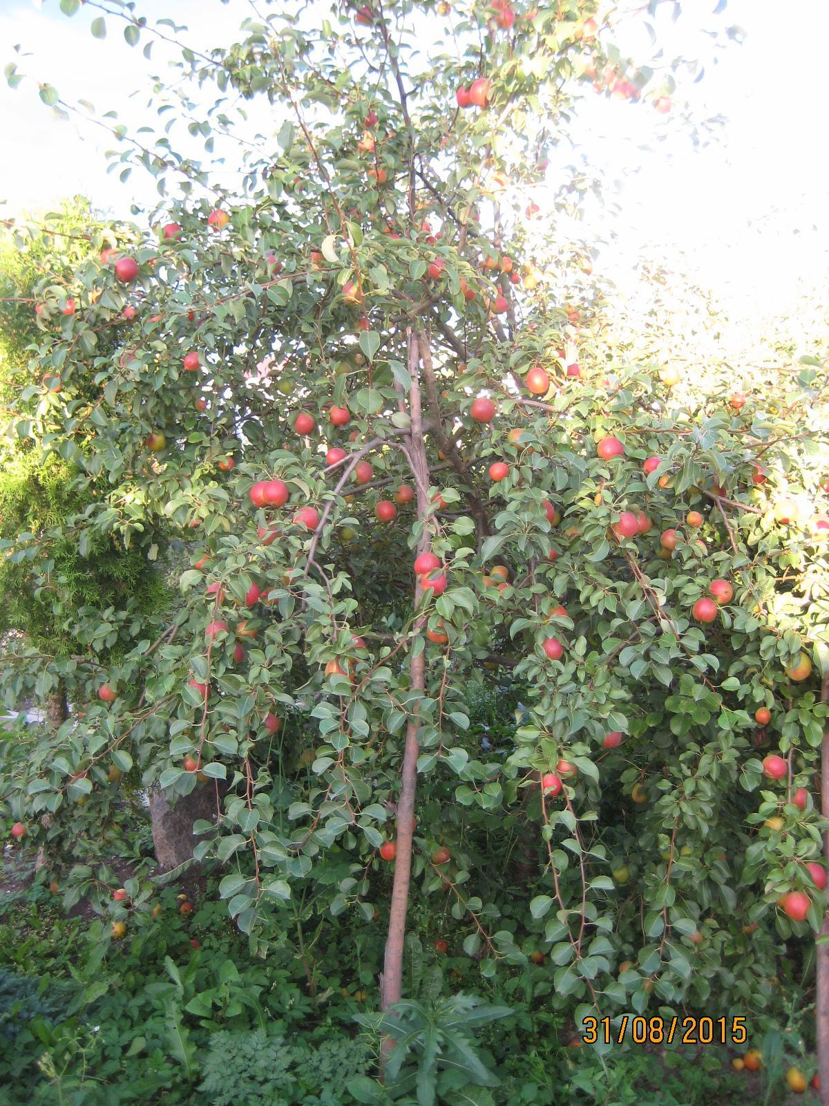 Маточное дерево