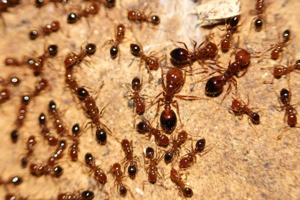 Как завести муравьев