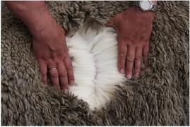 Мериносовая шерсть