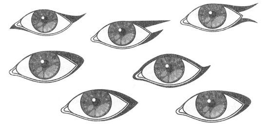 Виды подводок глаз