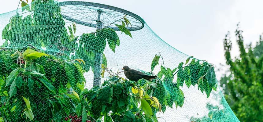 Сетки от птиц для огорода и полей