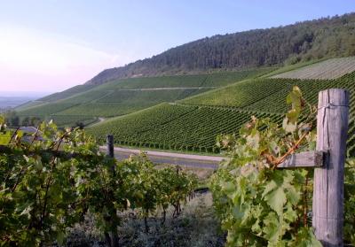 винный регион долины Rogue Valley