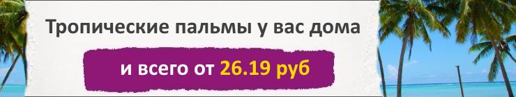 Купить Семена Пальмовых, цена низкая, доставка почтой наложенным платежом по России, курьером по Москве - интернет-магазин АгроБум