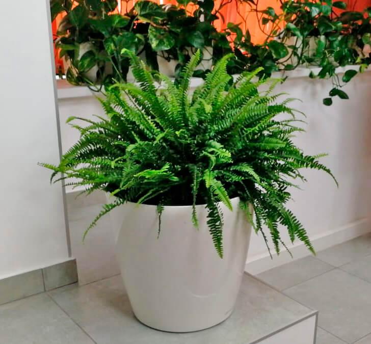 Фотография комнатных растений в офисе