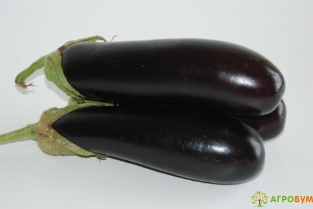 Купить семена Баклажан Индус 0,3 г по низкой цене доставка курьером по Москве - интернет-магазин АгроБум.Ру.Ру