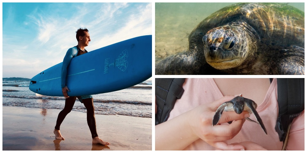 3 день серф-тура на Шри Ланку. Черепахи