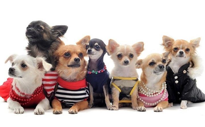 Одежда для собак является редко востребованным товаром