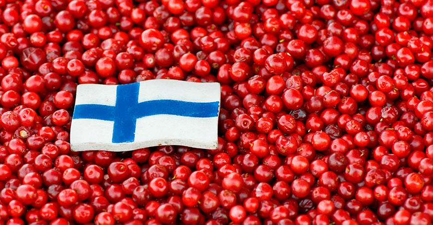 Финские бренды