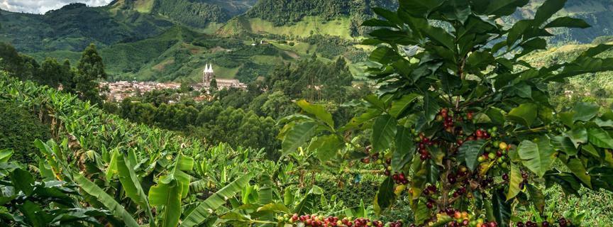 Кофе без кофеина из Колумбии