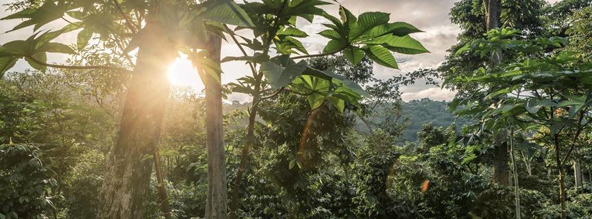 Кофе арабика в зернах из Бразилии