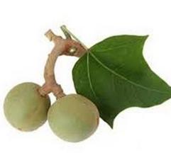 Масло кукуи (Aleurites moluccana)