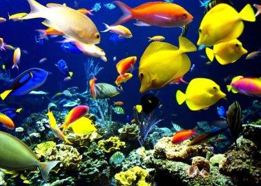 покупка рыбок для аквариума