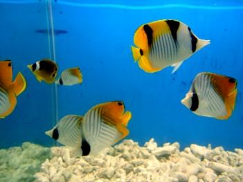 Чем выгодна покупка рыбок в интернет магазине?