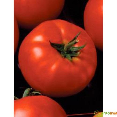 Купить семена Томат Миледи F1 12 шт. по низкой цене, доставка почтой наложенным платежом по России, курьером по Москве - интернет-магазин АгроБум