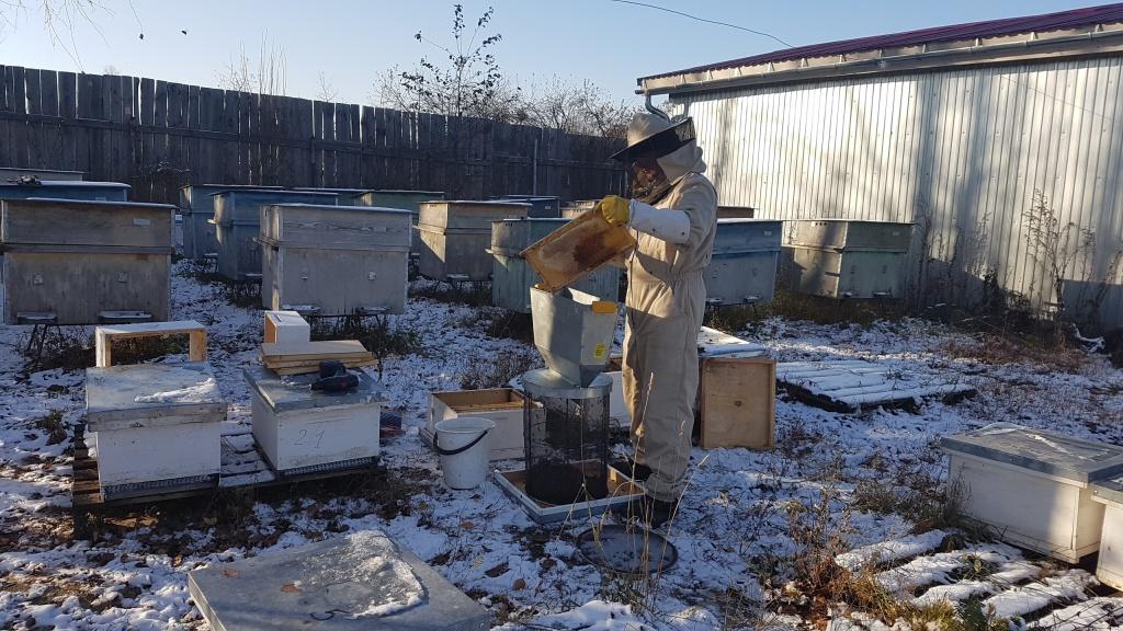 Стряхивание пчел в кассету 1