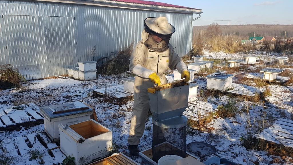 Стряхивание пчел в кассету 5