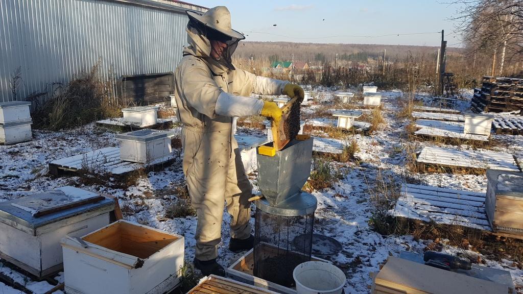 Стряхивание пчел в кассету 4