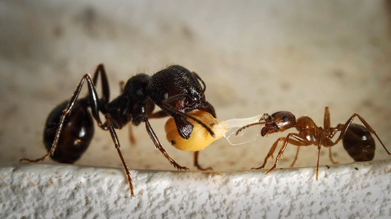 Почему муравьи умирают
