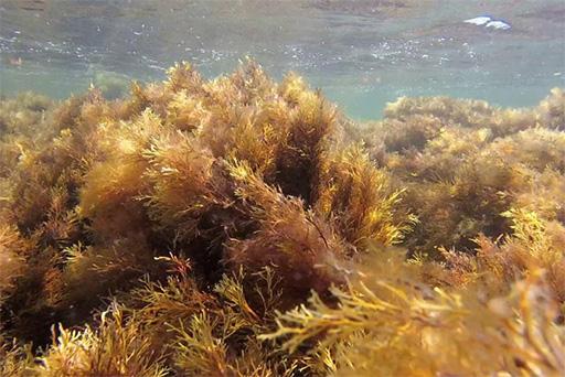 Крымские водоросли