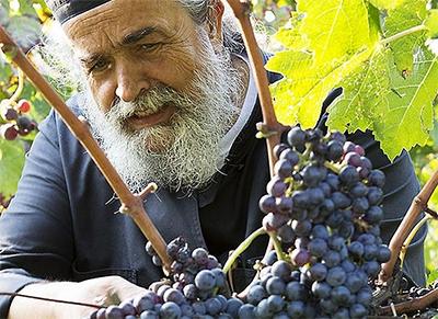 Греческие виноделы