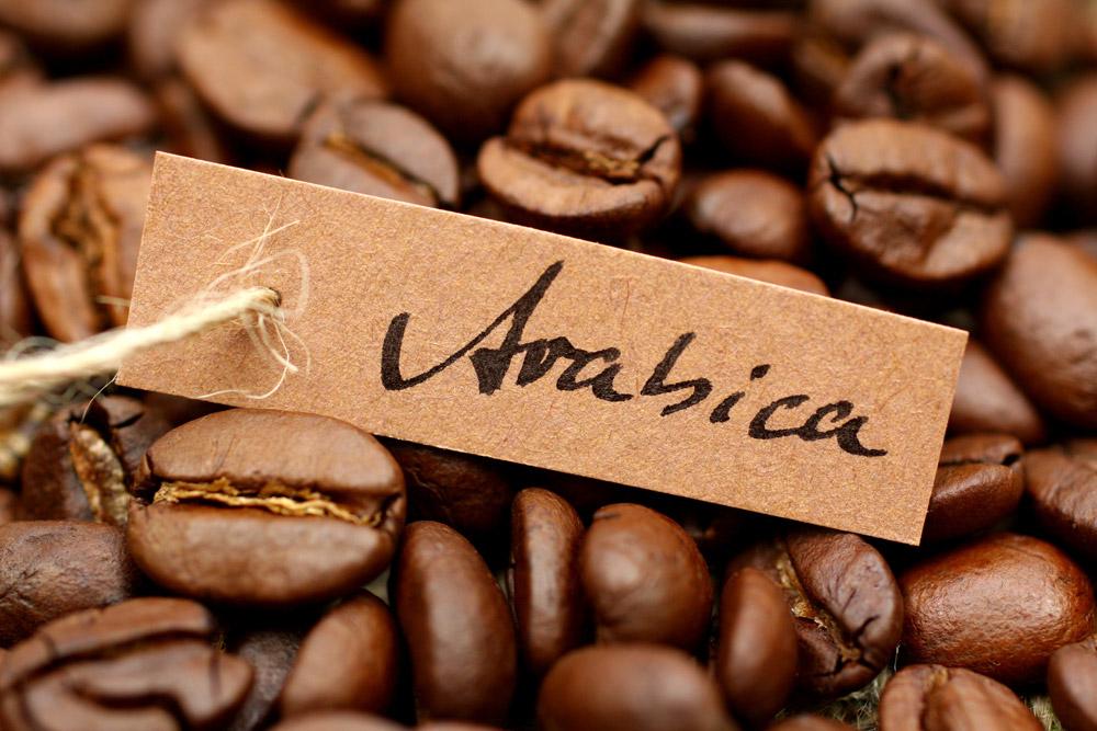 фото кофе арабика