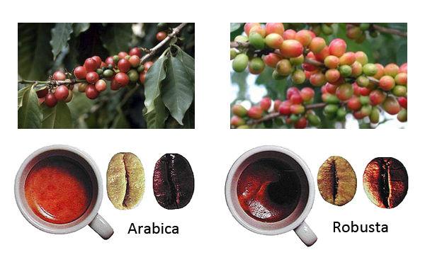 фото сравнение вкусов арабики