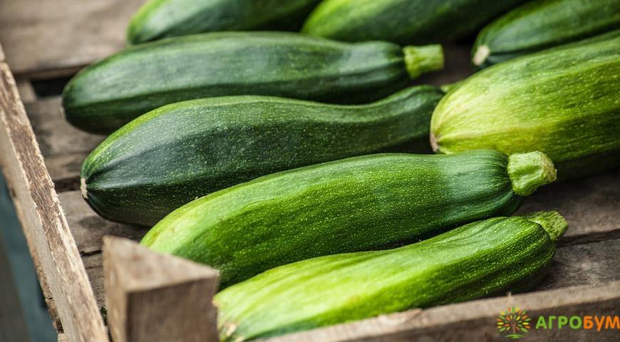 Купить семена Кабачок Мавр 2 г по низкой цене, доставка почтой наложенным платежом по России, курьером по Москве - интернет-магазин АгроБум