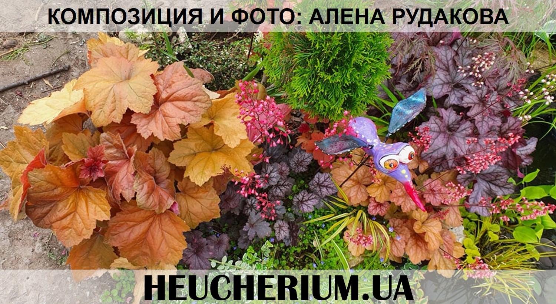 Композиция из гейхер г.Николаев