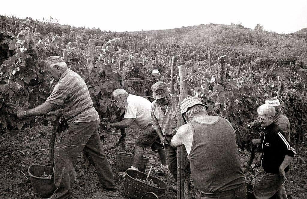 Виноградники La Caplana