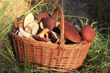 грибы корзина