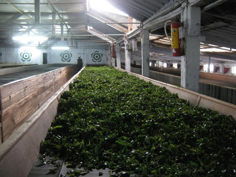 ferment1.jpg