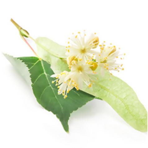Гидролат липы (Tilia cordata)