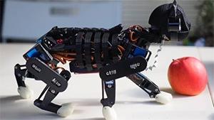 Робот-кошка сможет обучаться