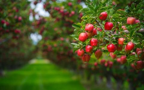 Скидка 15% на все плодовые растения